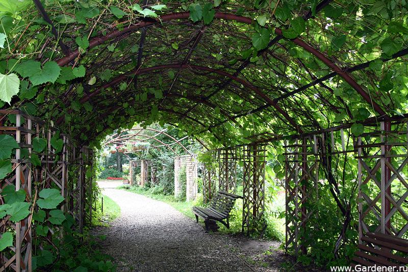 Ботанический сад в санкт петербурге